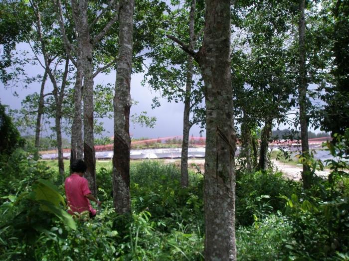8.5 Rai Land For Sale In Pa Khok Phuket