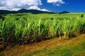 Land For Sugar Cane Crop