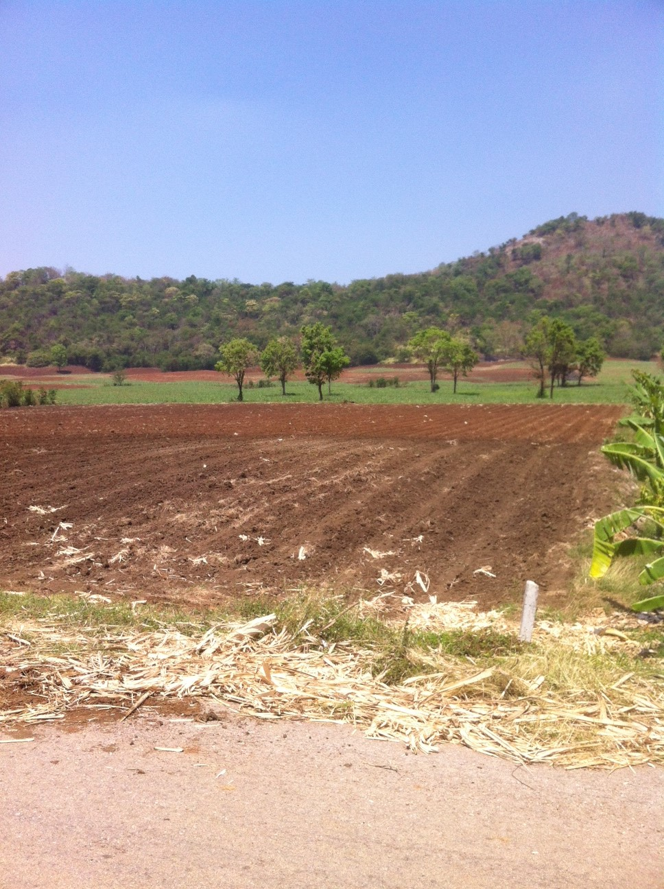 49 Rai of good agricultural land for sale