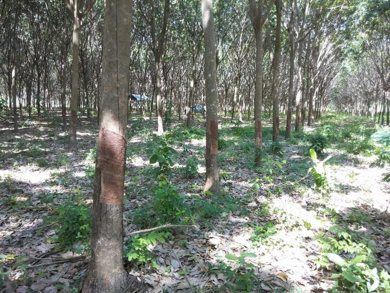 Land For Sale, 14 Rai
