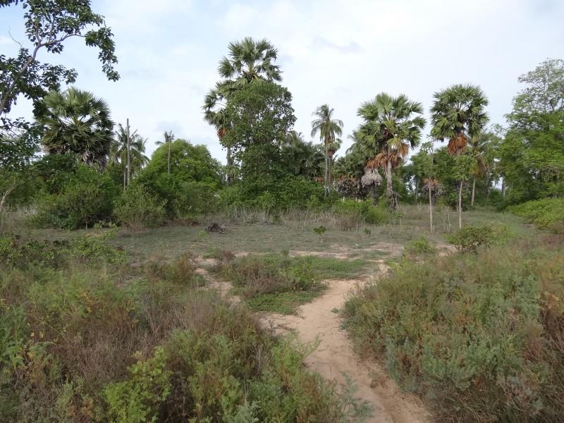Cha-am Beach North 16 Rai