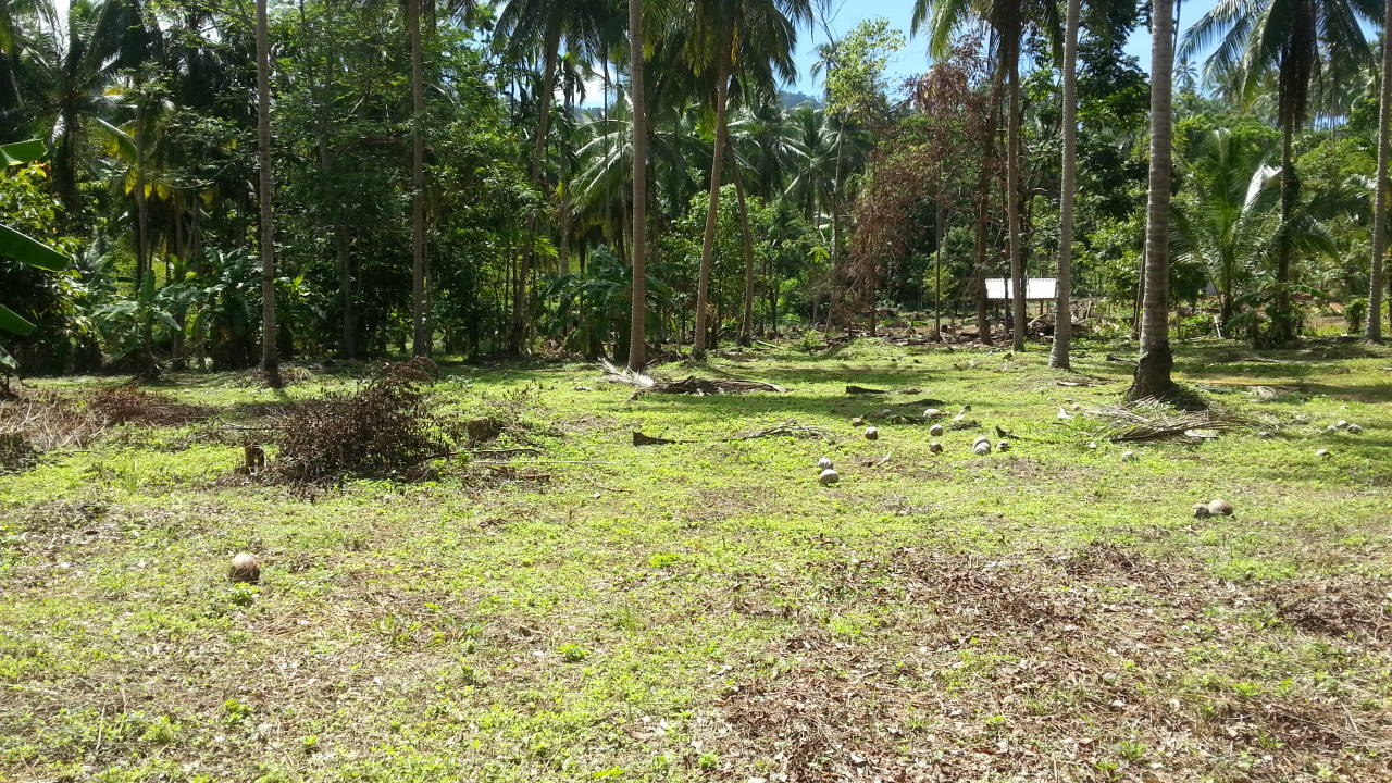 Koh Samui, flat land 7 rai for sale