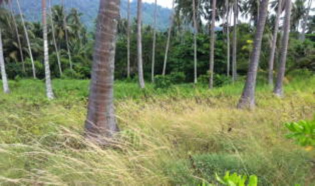 Sea view land for sale in Kata Phuket