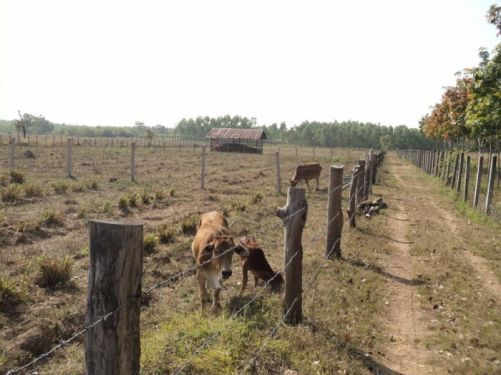 Farm and Land for sale in the province of Sakon Nakhon