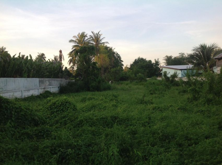 Land for sale 1 rai