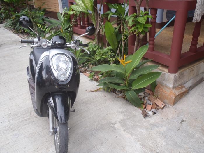 Honda Scoopy 8100kms Price Negociable