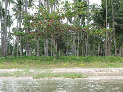 Beachfront Land and house near Lang Suan, Chumphon.