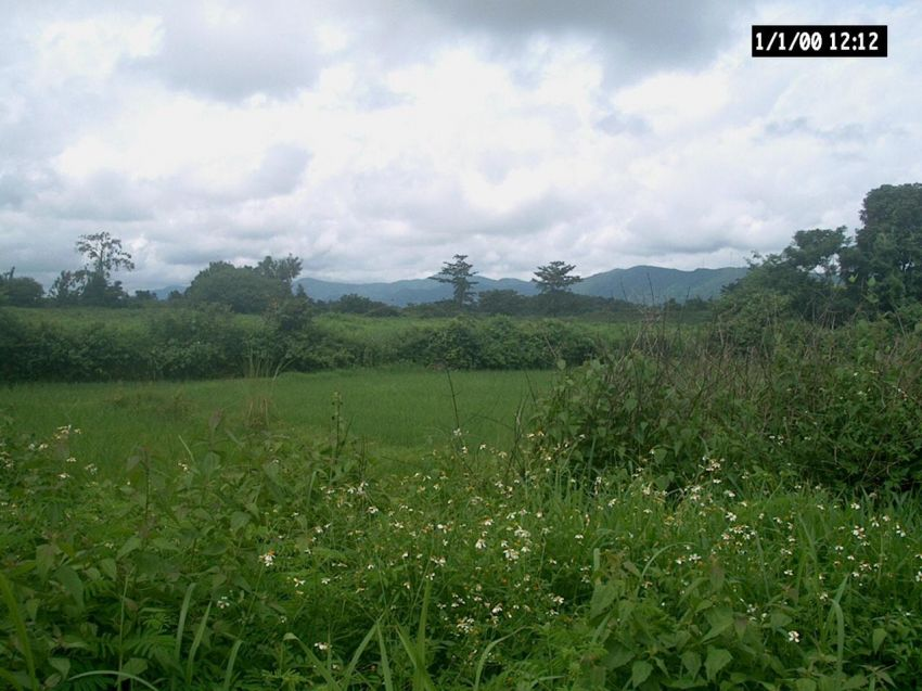 Land for sale Chiang Rai