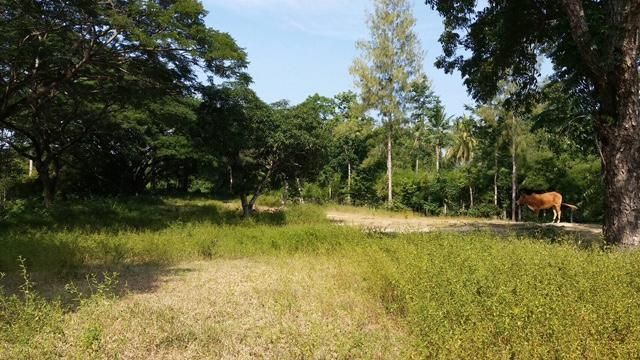 Land for sale soi 88