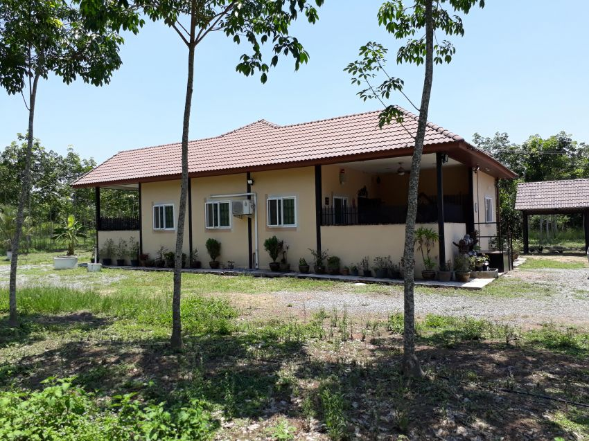 Rubber Tree Farm and House 22 Rai 6 Year Old Trees