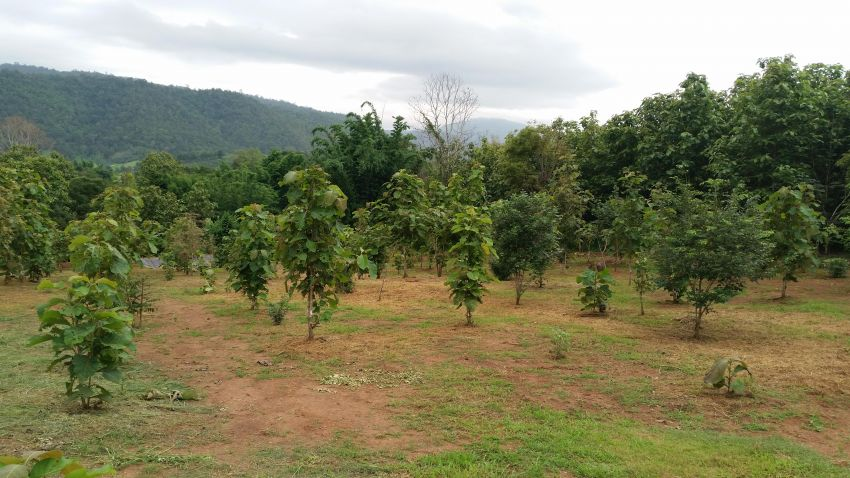 **REDUCED PRICE** 6.6 rai of beautiful land in Samoeng Nua, Chiang Mai