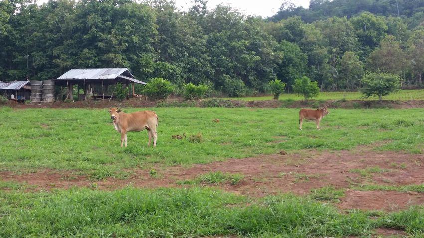 **REDUCED PRICE** 6.6 rai of beautiful land in Samoeng Nua, Chiang Mai