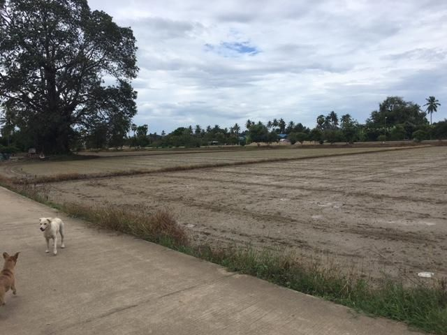 5 plus Rai flat land Tha Yang near Petchkasim