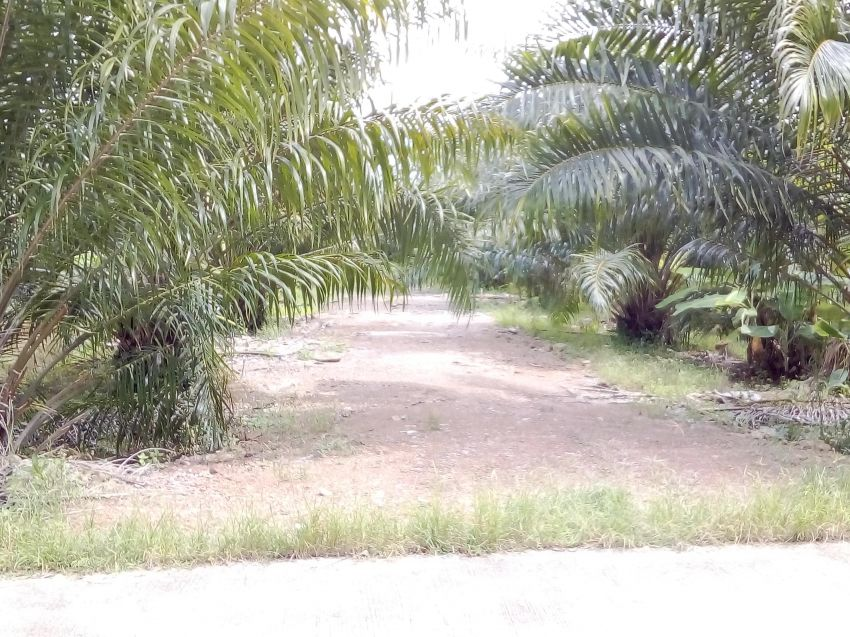 3-2 Rai for Sale in Khanom