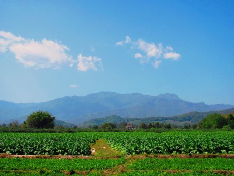 Incredible Mountain Views for Sale 1 Rai Price Reduced