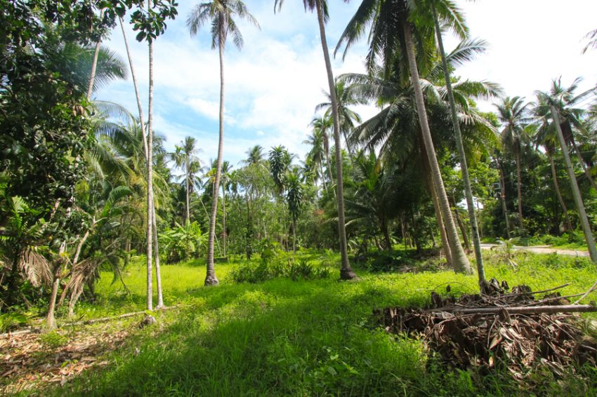 Koh Phangan small plot for sale