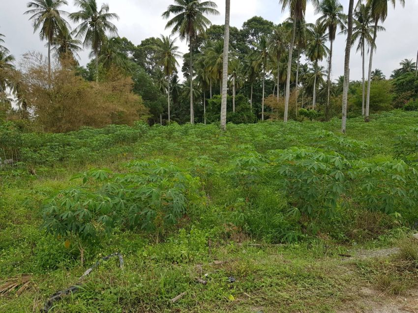 1 Rai 360 Twah Land Plot for Sale