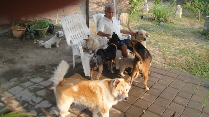 Pooch Resort /Safe And Secure /We Take The Stress