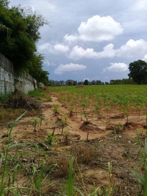 Urgent sale, lower price 15 Rai plot for sale