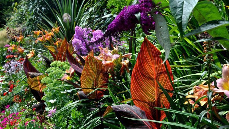 Unwanted Plants (Outdoor & Indoor)