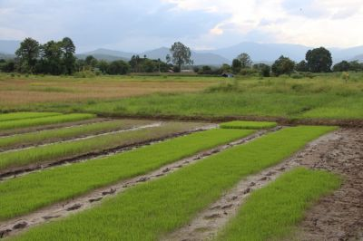 9.7 Rai Quality Mountain View Farm Land