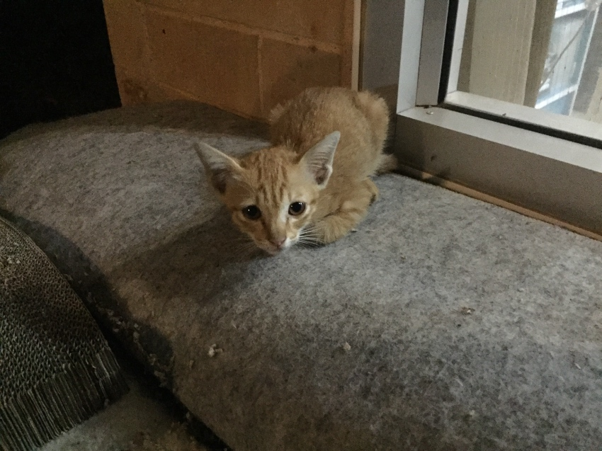 Free cute little kitty needs a home