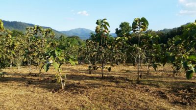 **BARGAIN - REDUCED PRICE** 6.6 rai of excellent land near Chiang Mai