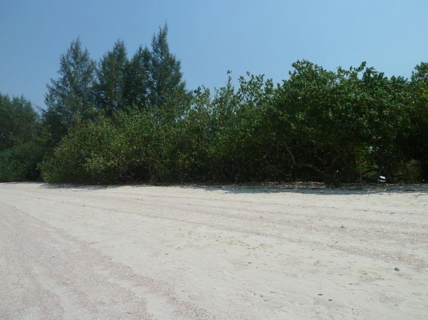 Prime Beachfront Land on Koh Phayam for rent