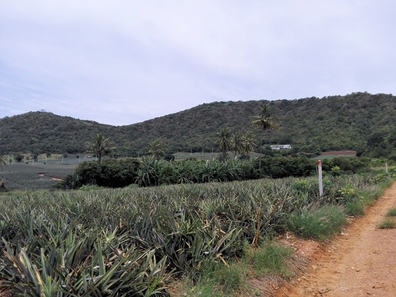 Beautiful  8 Rai  Hillside Land  Near Pak Nam Pran & Khao Kolok Beach