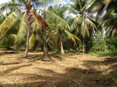 For sale land 800m² Chalok Ban Kao Koh Phangan near the beach