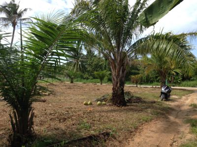 For sale land Chalok Baan Kao Koh Phangan 716m² near the beach