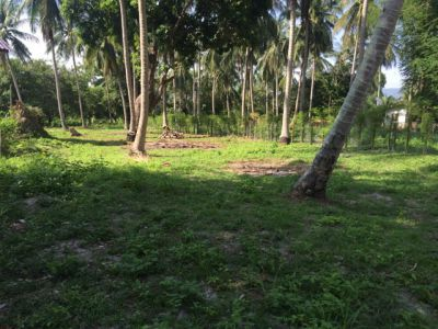 For sale land 736m ² flat in the middle of a coconut grove 2 km beach