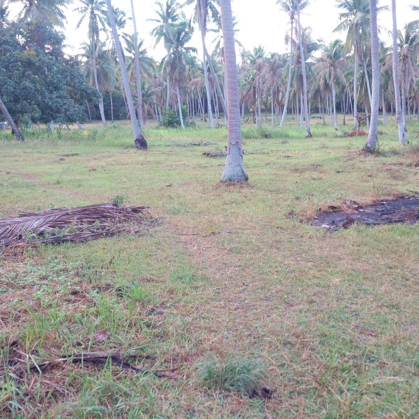 Land 1.600m2 flat chanote in a coconut grove, near Hin Kong Bay