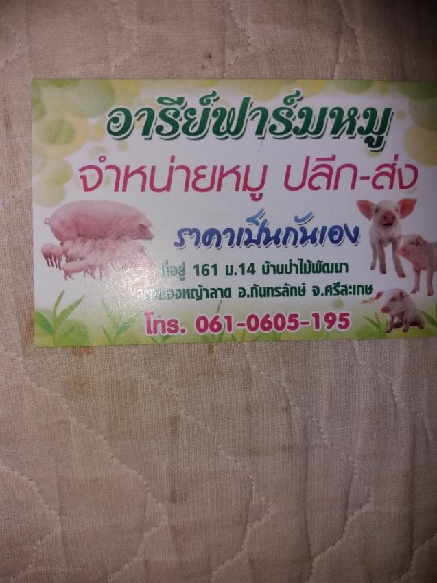 Pig farm plus house in Sisaket north east Thailand