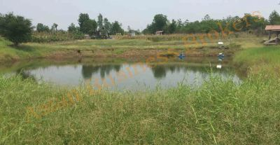 4201001 Large 17.3 Rai Plot of Land for Sale in Phetchabun
