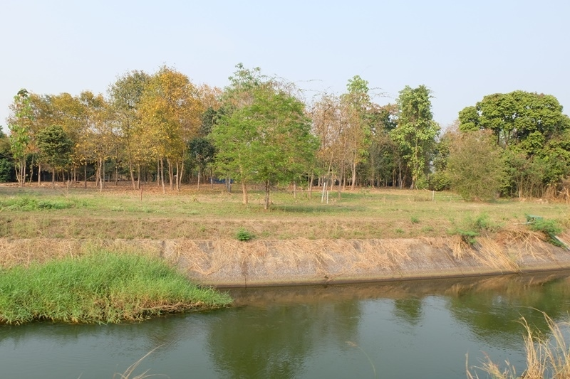 A land for sale near 118 rd. in Doi Saket.