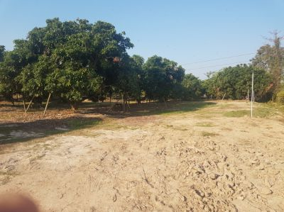 Land 3 Rai near new Grace International School, Hang Dong, Chiang Mai