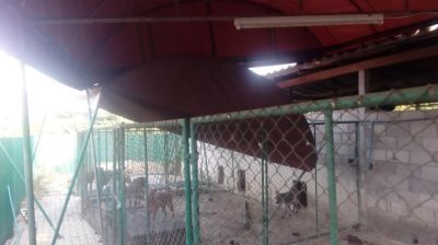 Chainlink fencing for dog kennel runs. Tents as shade covering for car