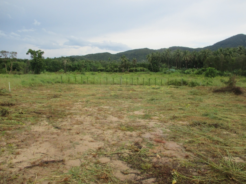 Nice plot for sale or lease 30Y, quiet place in Koh Phangan