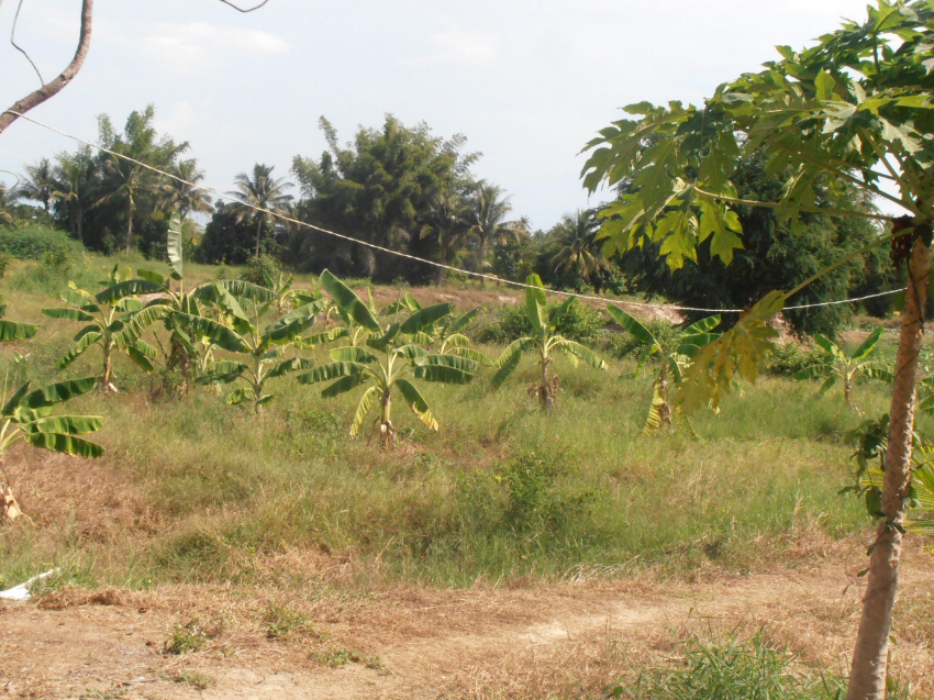 20 Rai of Farm land/building land Cha am region nice area All