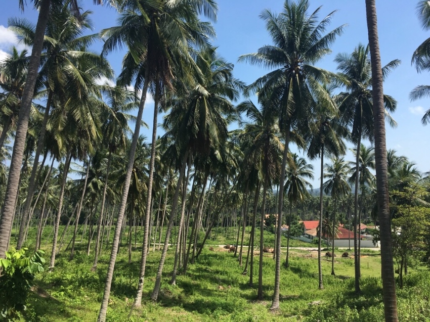 Large Quiet Residential Plot Koh Samui with views