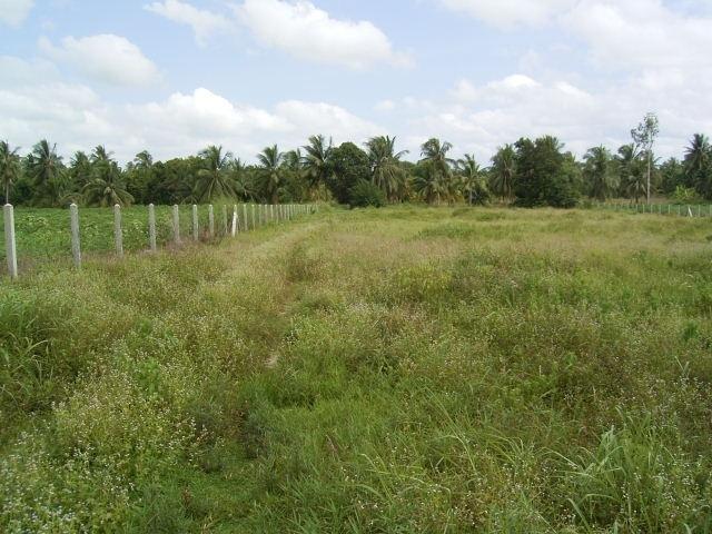 Land For Sale At Huay Yai Gin.  20.30 rai
