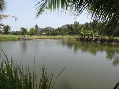Hot! Reduced 9-2-25 Rai Mountain View Valley Land 1.5 Rai Pond
