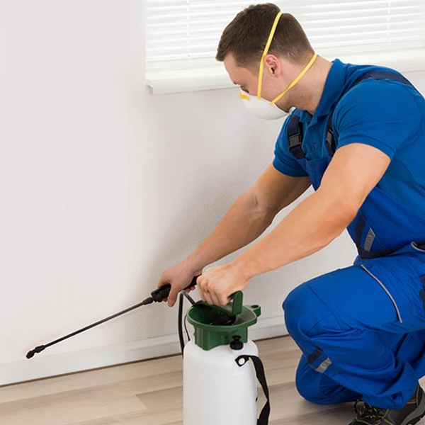 Pest Control Services in Pattaya