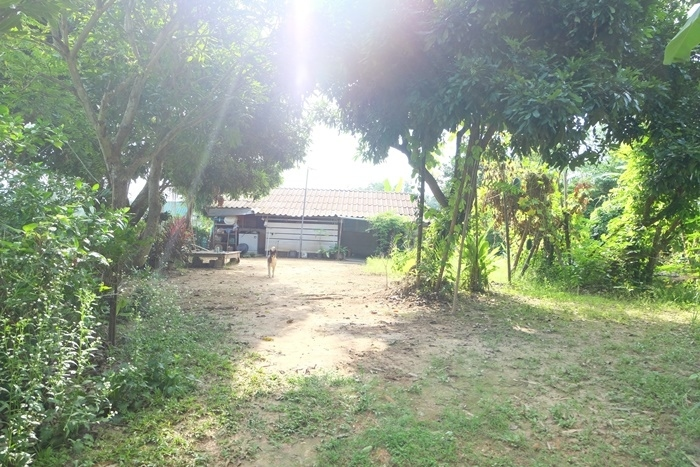 Land for sale in quiet area Doi Saket, Chiang Mai