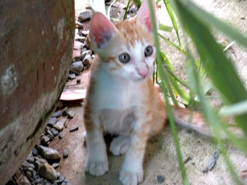 3 lovely kitten (9 weeks old) seeking for a good home / Cat playpen