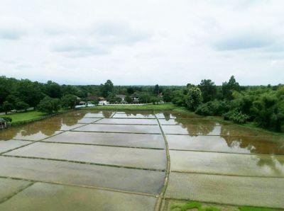 Paddy fields for sale near 1014 rd. Doi Saket, Chiang Mai