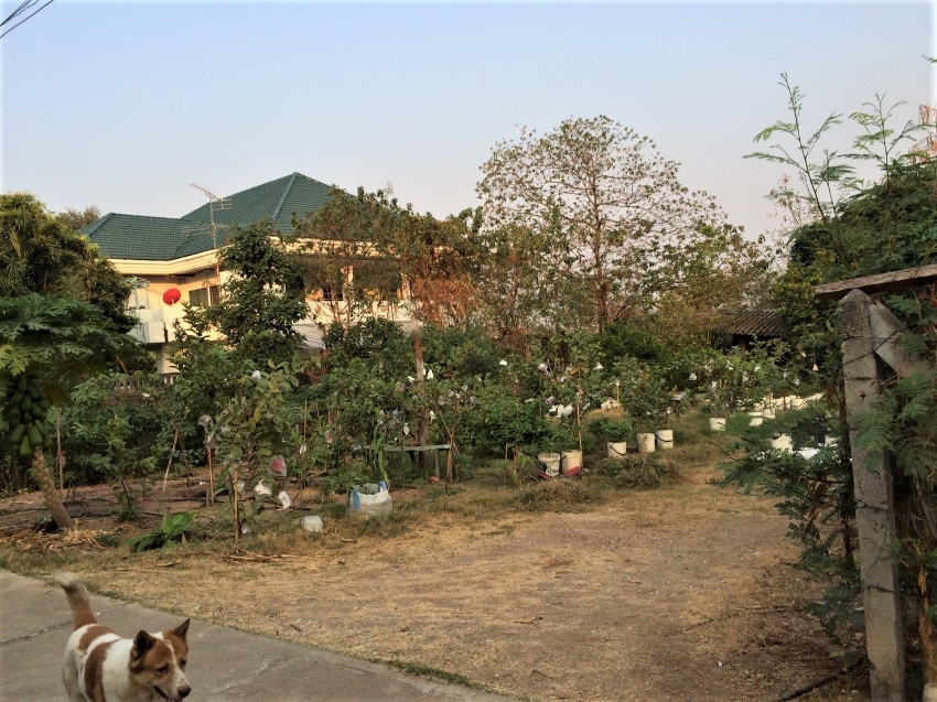 organic farm for rent/sell