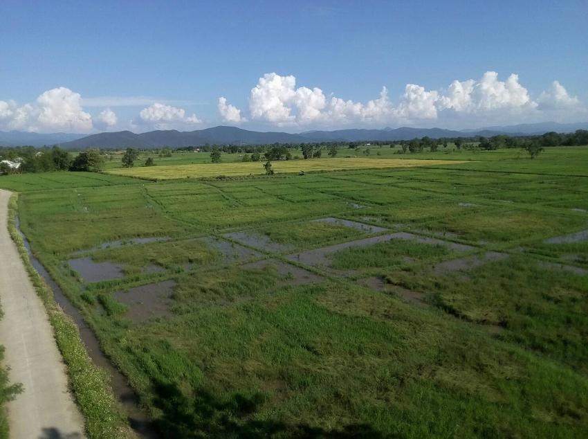 A beautiful rice field in nice atmosphere Pa Pong, Doi Saket.