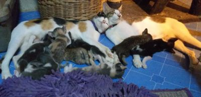 Cats & kittens looking for loving home